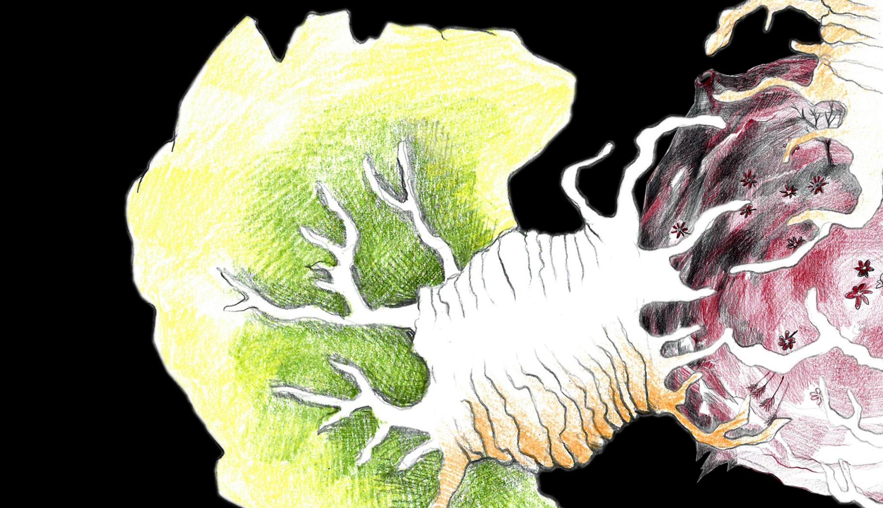 0503 Affenbrotbäume